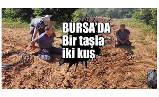 Bursa'da 20 yıl hapis cezası bulunan şüpheli ormanlık alanda esrar tarlasında yakalandı