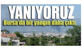 Bursa'da bir yangın daha çıktı