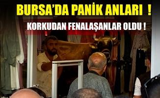 Bursa'da kaçan boğa girdiği giyim mağazasını birbirine kattı