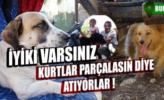 """Bursa'da """"kurtlar parçalasın"""" diye dağa atılan köpeklere köylüler sahip çıktı"""