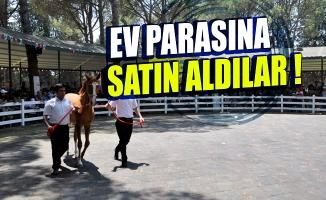 Bursa'da yarış tayları ev fiyatına alıcı buldu