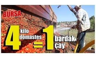 Bursa'da 4 kilo domatese köy kahvesinde 1 bardak çay içen üretici isyan etti