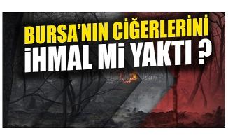 Bursa Mudanya'da çıkan orman yangını ihmal mi?