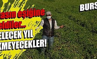 Bursa'da çiftçi iflas noktasına geldi: Fiyatlar tarlada 35 kuruşa düştü!