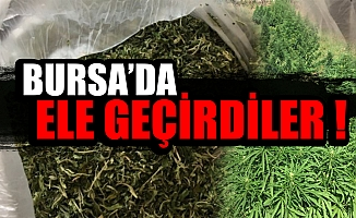 Bursa'da polis 283 kök hint keneviri ele geçirdi