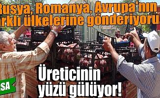 Bursa'da şeftali üreticisinin yüzü bu yıl güldü!