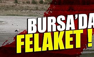 Bursa Mudanya'da binlerce balık telef oldu