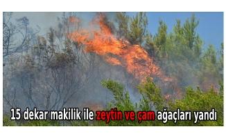 15 dekar makilik ile zeytin ve çam ağaçları yandı