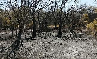 Datça'da çıkan orman yangınında 1 hektarlık alan zarar gördü