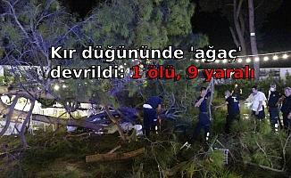 Kır düğününde 'ağaç' devrildi: 1 ölü, 9 yaralı