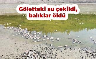 Göletteki su çekildi, balıklar öldü