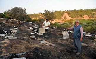 250 kovan yandı, yaklaşık 5 milyon arı öldü