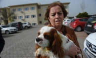 Bursa'da pitbull dehşeti yaşandı