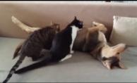 Bursa'da anne köpek kedileri emziriyor