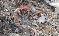 Saldırıya uğradılar, sadece kemikleri kaldı