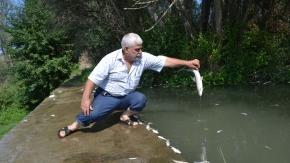 İnegöl'de kabusa dönen balık ölümleriyle ilgili açıklama geldi