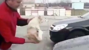 Arabasını kediyle temizledi.. Buz gibi havada hayvana eziyet etti